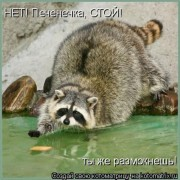 http://thumbnails29.imagebam.com/10262/5b781e102617330.jpg