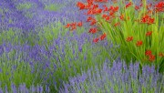 Flowers and Gardens HQ wallpapers Collection 1 51e797108223899