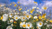 Flowers and Gardens HQ wallpapers Collection 1 Abfeb3108222584