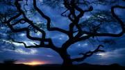 Beautiful Nature Wallpapers - Part 1 C23310108361598