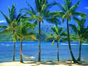 Beautiful Beaches Of The World HQ Wallpapers F95729108499843